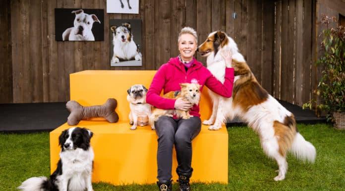 Mein Hund fürs Leben mit Sonja Zietlow am 27.06. im ZDF